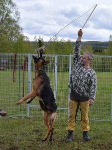 hundcoach 2